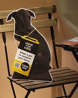 ikea-shelter-dogs-featimg