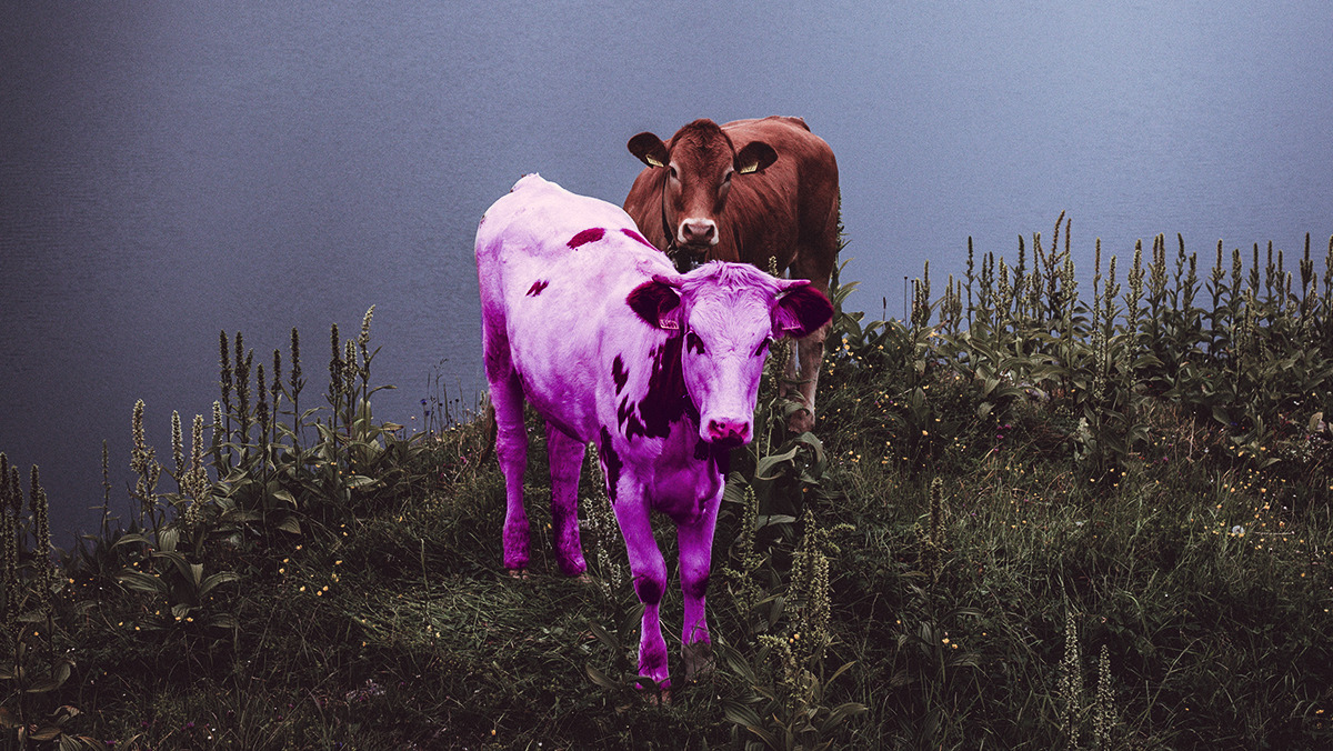 The End of the Inconspicuous Purple Cow